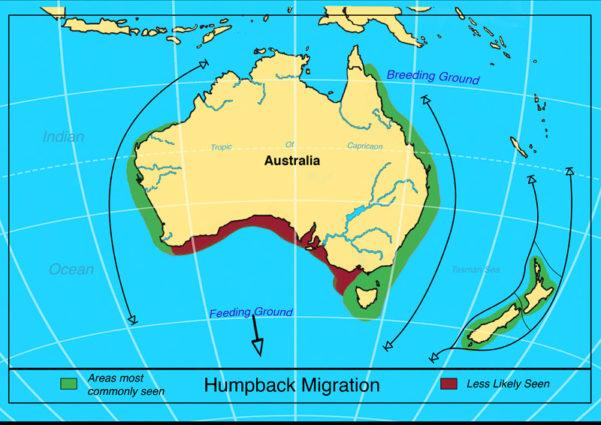 garrettsen-eckerson-humpaback-migration-map