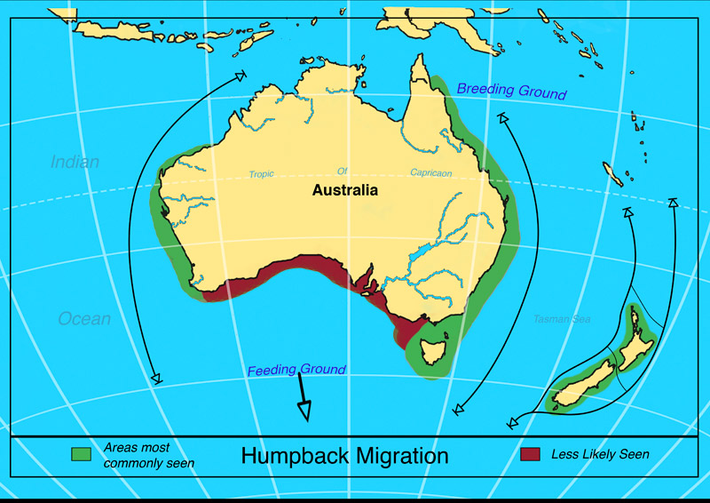 garrettsen-eckerson-humpaback-migration-map