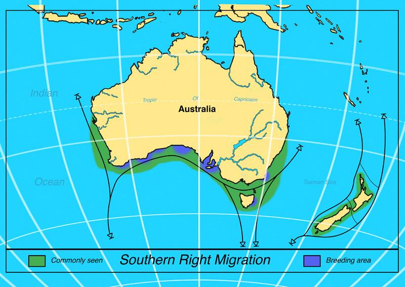 garrettsen-eckerson-srw-migration-map