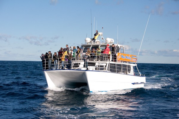 Whale Watching & Photography Workshops