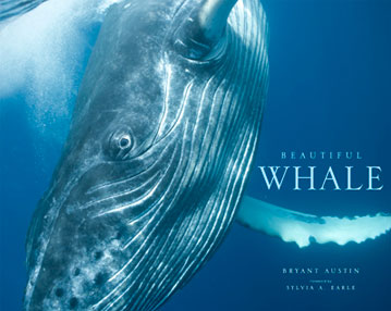 Beautiful Whale by Bryant Austin