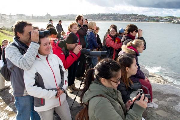 Bondi Whale Festival 2013