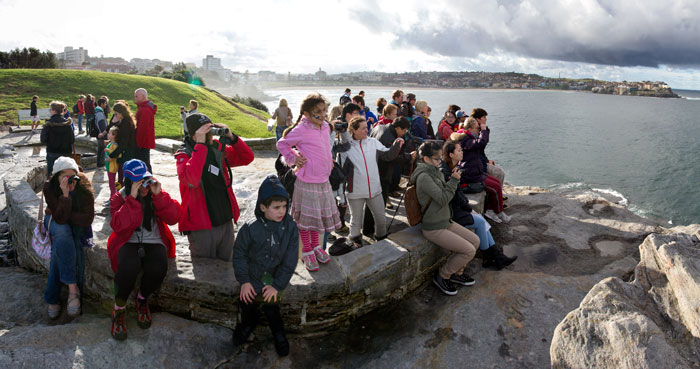 Whale Watching at Marks Park