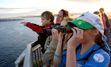 Whale Watching - North Head, Sydney 2014