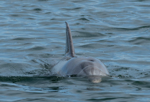 Adelaide's Port River Dolphins