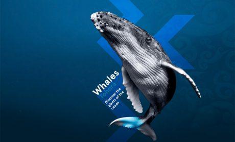 Whales │Tohorā